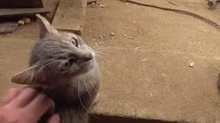 кошка без имени хорошо живет