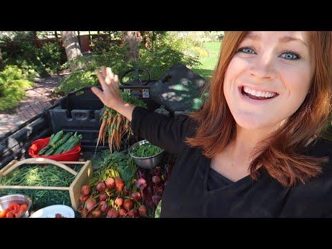 Harvesting Fall Crops! 🍓🥒🥕// Garden Answer