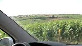 ニュイ・サン・ジョルジュの葡萄畑を進む20060621 Nuits-Saint-Georges