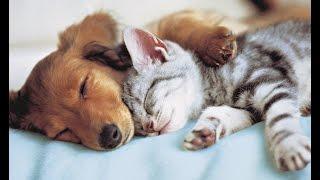 Собаки-кошки и кошки-собаки