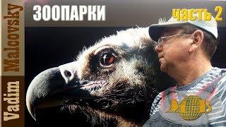 Зоопарки. Часть 2. Зоопарк г. Санкт Петербург. Zoo of St. Petersburg