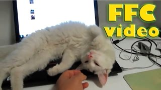 Cats are the best assistants :)