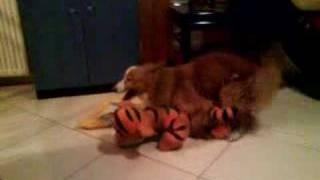 Dog fucks stuffed animal
