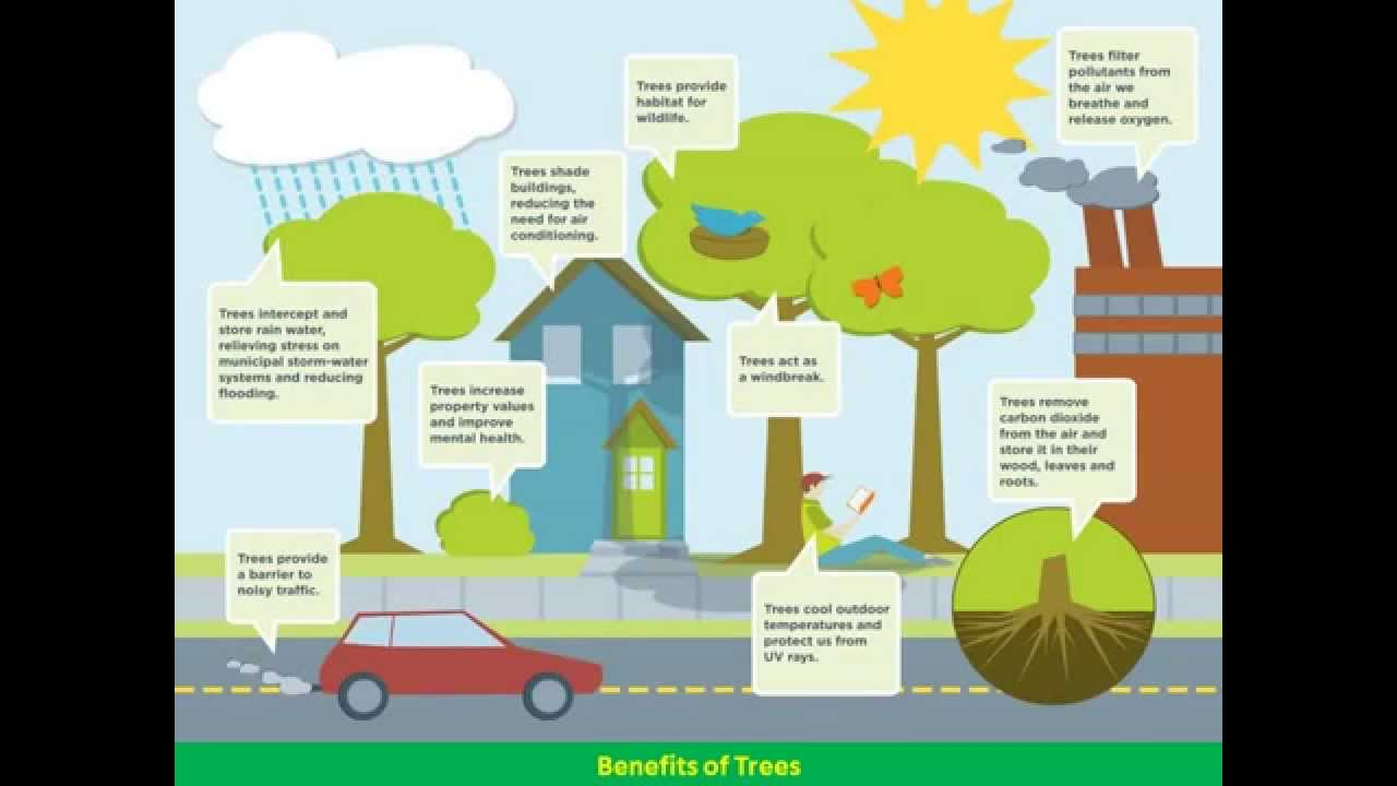the benefits of trees to environmental conditions A growing pile of research suggests that planting more urban trees,  they can  also retain storm water, boost real estate values, and may even have important  mental-health benefits plus  next up in energy & environment.