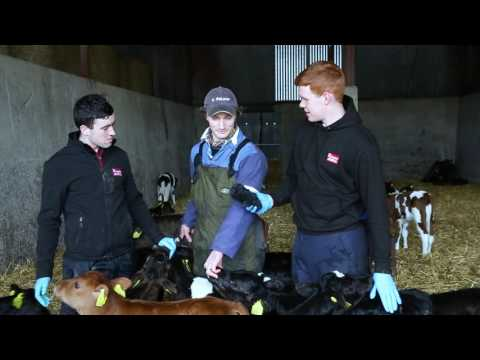 24 hours of calving