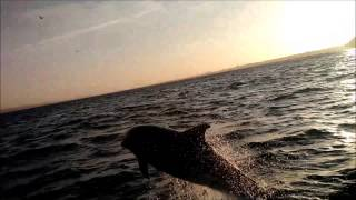 The day the dolphins came to Christchurch Bay Dorset May 16th 2015 vid 3