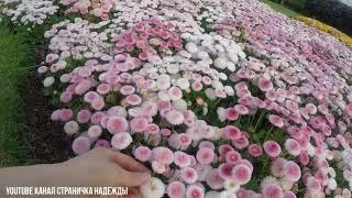 Английские сады в Мае