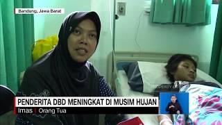 Mengenal penyakit Demam Berdarah Dengue.