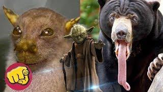 ESPECIES NUEVAS DE ANIMALES  jamás vistos, nuevas ESPECIES 2018 educativo
