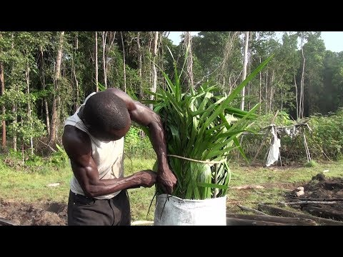 DOCUMENTAIRE - LA PRODUCTION DU CHARBON DE BOIS AU CONGO