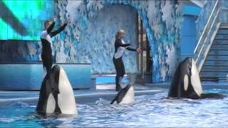 Sea World Shamu Show with Dawn Brancheau- 3 days before she was killed by an orca!!!