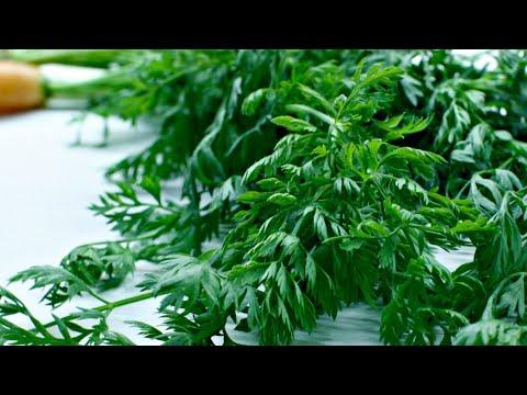 Учёные утверждают: МОРКОВНАЯ БОТВА ПОЛЕЗНЕЕ самой МОРКОВИ более, чем в 100 раз! | холестерин | организма | морковная | средства | очищение | народные | давление | сосудов | склероз | моркови