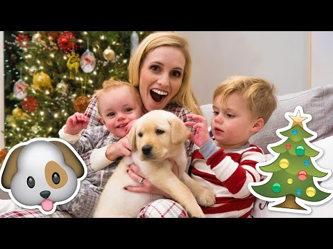 Thumbnail: NEW PUPPY HOLIDAY SURPRISE! 🐶