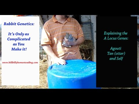 Rabbit Genetics - Explaining the Agouti Gene, the Otter Gene, and the Self Gene in Rabbits