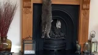 「さあ、華麗にジャンプ…したかった」マントルピースに飛び乗ろうとして果たせなかった猫