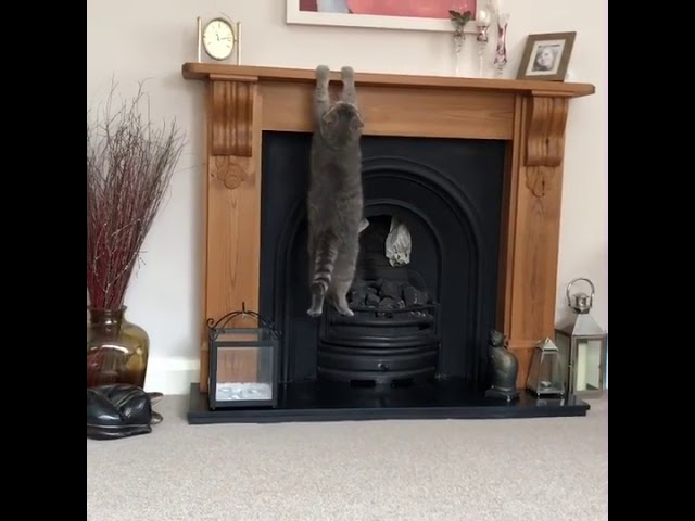 Cat Can't Climb Fireplace Mantle – 993113