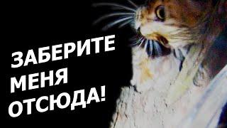 Заберите меня отсюда! - снимаем кота с сосны