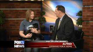 Pet of the Week - Alfred!