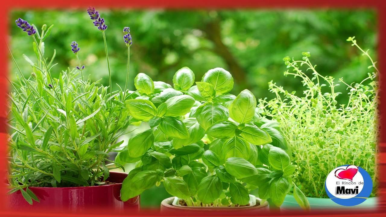 10 plantas medicinales que puedes cultivar en casa y sus
