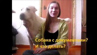 Собака с документами?
