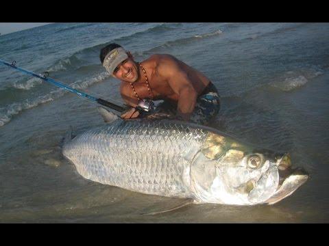 Tarpon Géant De GuineeBissau, Giant Tarpon Fishing Guinea Bissau
