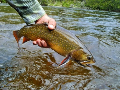 Mattawa Fly Fishing | Ontario