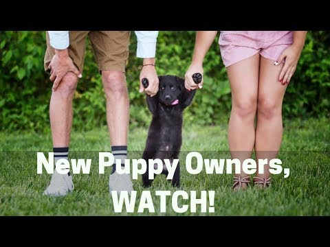 3 Things New Puppy Owners Don't Realize About Training Their Puppy!