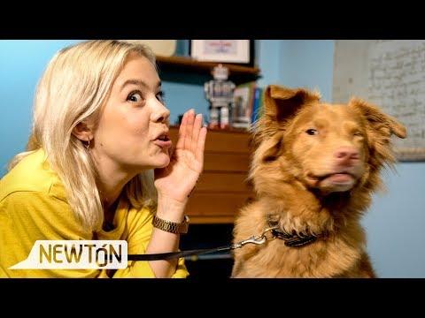 Du kan snakke hundespråk!