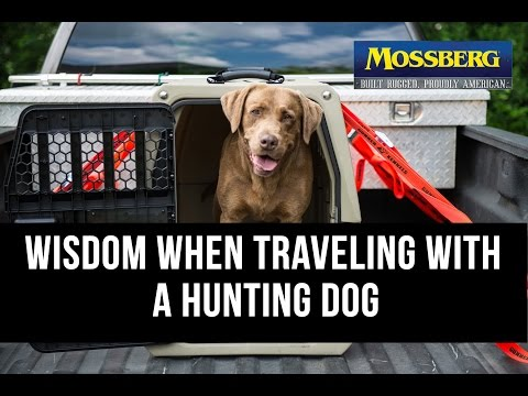 Dog Crate: Traveling With A Hunting Retriever In A Dog Kennel – Mossberg
