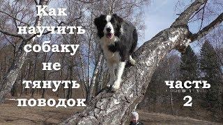 Как научить собаку не тянуть поводок. Часть 2 / Дрессировка собак