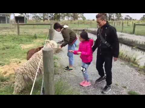 Melbourne farm 2