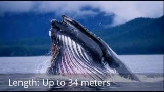 Top 10 Biggest Sea Animals