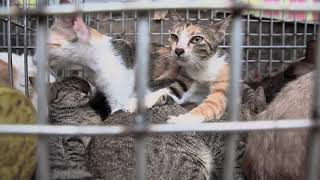 Victims of a Hidden Trade – Ending Vietnam's Cat Meat Trade