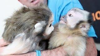 CUTE Baby Monkey & MonkeyBoo Petsie! (GIVEAWAY)