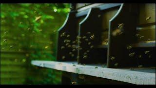 Bambus - Die Welt ist nicht genug (Official Video) prod. vanta