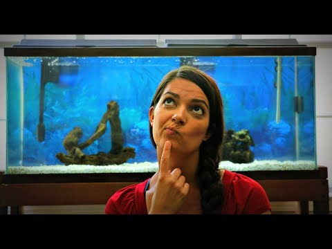 NEW FISH IN OUR AQUARIUM?