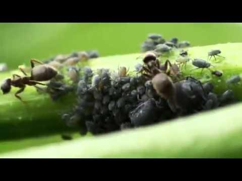 Unbekannte Welten   Der Mikrokosmos der Spinnen und Insekten 3 3   Dokumentation Deutsch HD