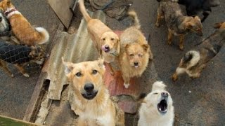 Собаки Донбаса