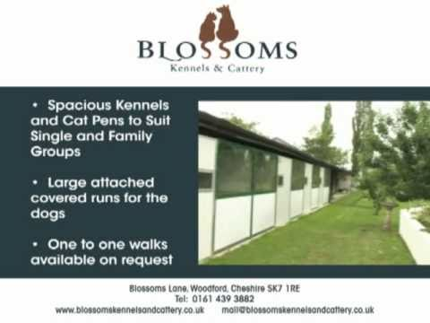 Blossoms - Kennels & Cattery, Woodford