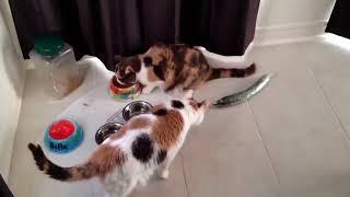 Смешные кошки приколы про кошек и котов  Коты и огурцы Funny cats