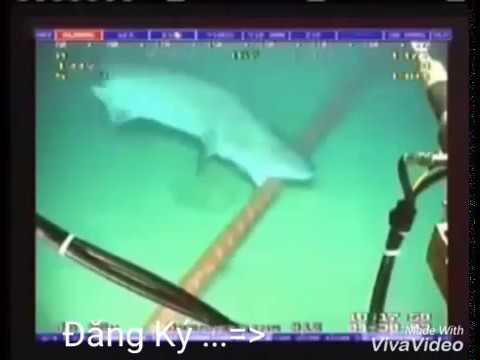 Cận cảnh cá mập cắn đứt cáp quang AAG – Shark bite close-optic cable