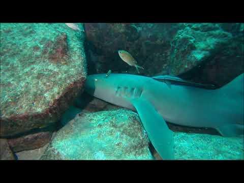 Diving the Rock, Grenada  - 22-08-17