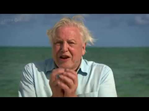 BBC.First.Life.with.David.Attenborough.2of2.Conquest.2010.59Min