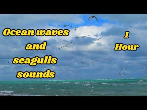 ocean waves sound effect, beach ambience with seagulls sounds