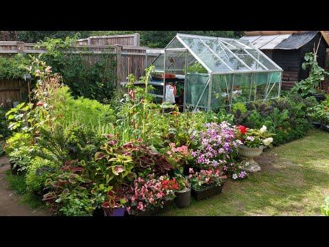 ปลูกดอกไม้ผสมกับผักในสวนเล็กๆหลังบ้าน - flowers and veg. in small space (15 Jul.20)
