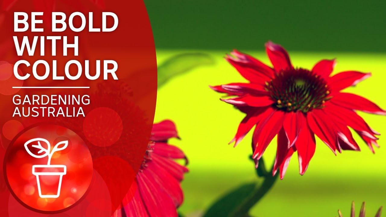 Forget subtlety and go all out for colour | Garden design and inspiration | Gardening Australia