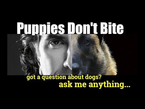 how-do-i-stop-my-puppy-from-biting---ask-me-anything---puppy-dog-training