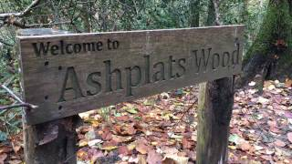 Have you visited Ashplats Wood in East Grinstead recently?  It's a beautiful open space that's pe...