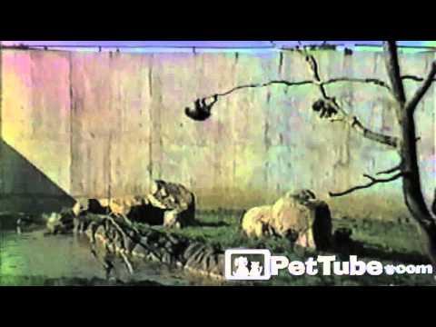 Animals Love Trees- PetTube