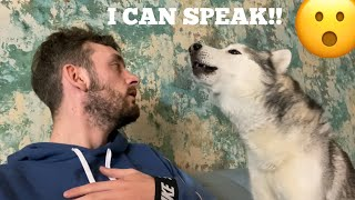 Teaching My Stubborn Husky To Talk Properly! [WITH CAPTIONS!!]